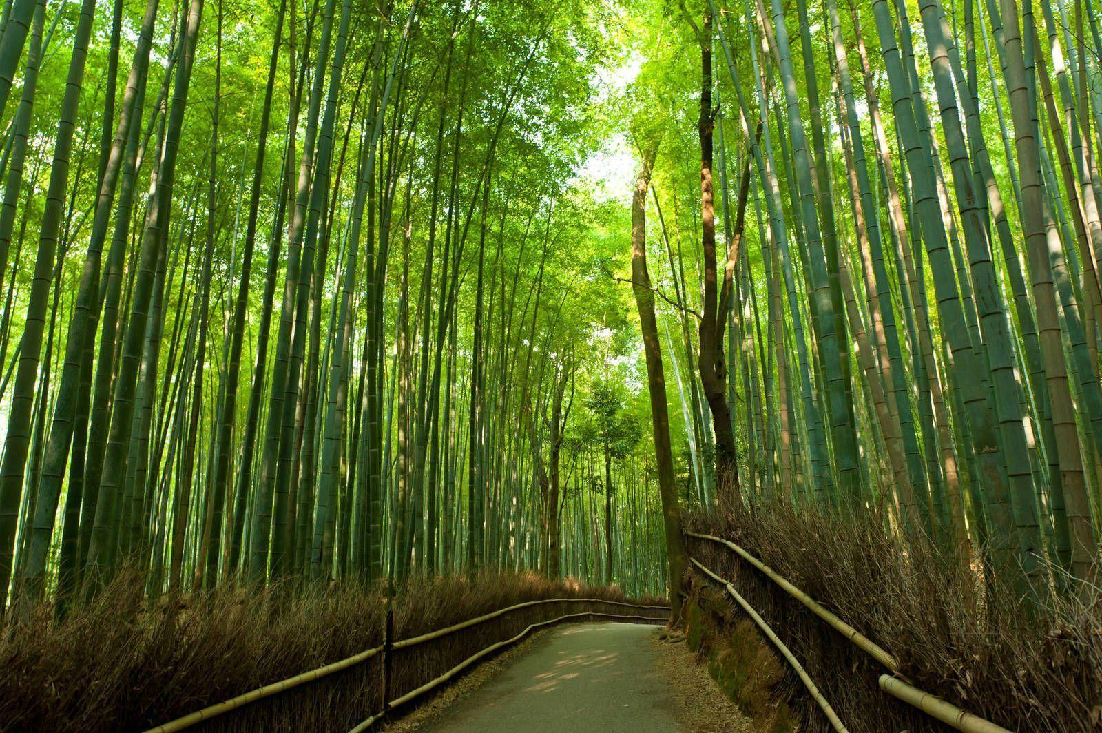 Фотообои на стену: бамбук и его ...: https://art-oboi.com.ua/fotooboi-bambuk.html