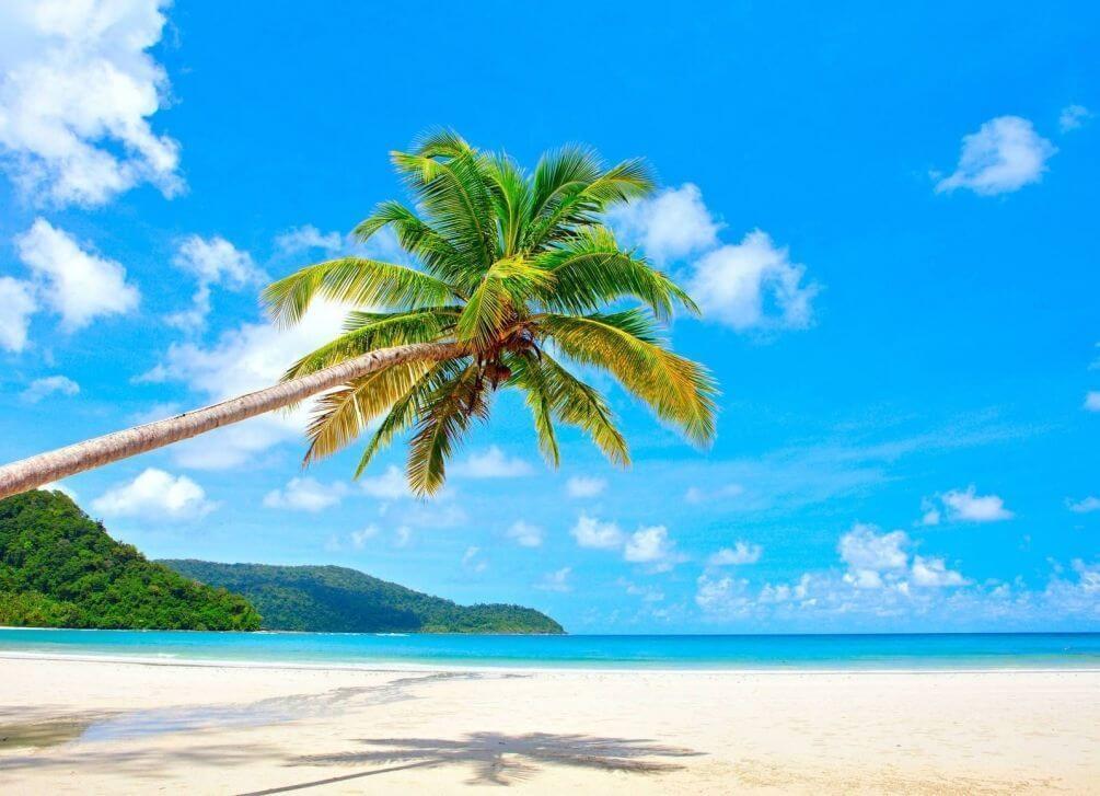 фотообои пальмы: