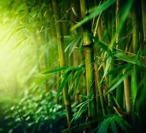Фотообои на стену: бамбук и его ...: https://www.art-oboi.com.ua/fotooboi-bambuk