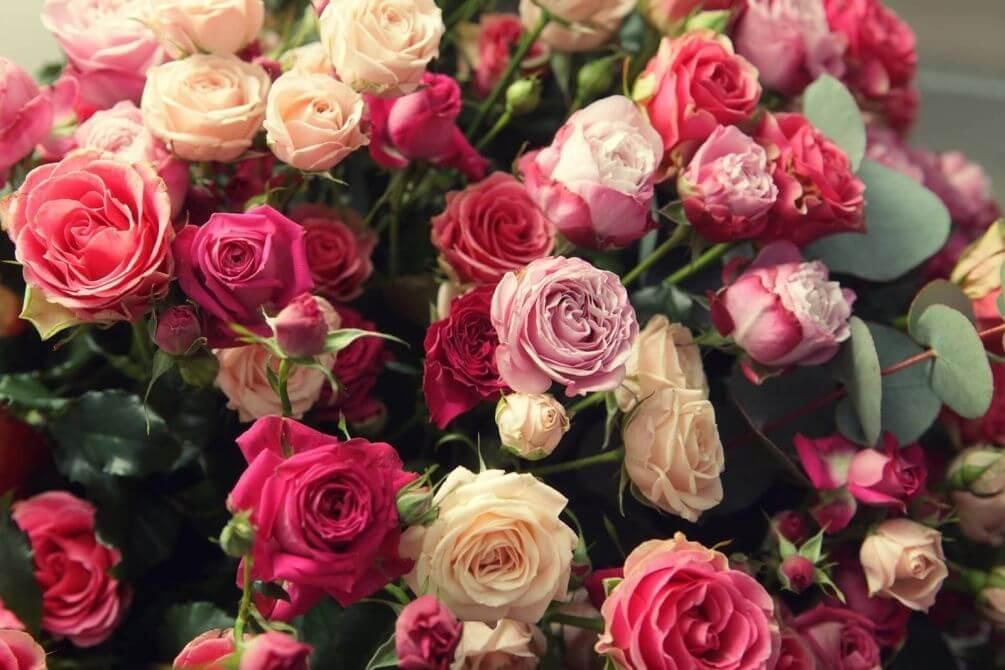 Самые красивые цветы розы