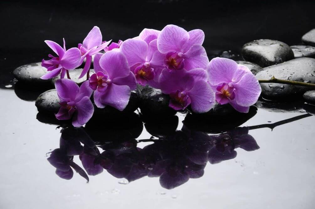 фотообои орхидеи в интерьере: