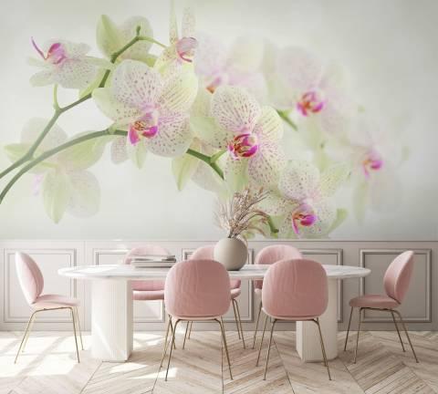 Фотообои орхидея фото