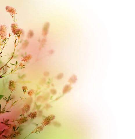 жасмин цветы обои