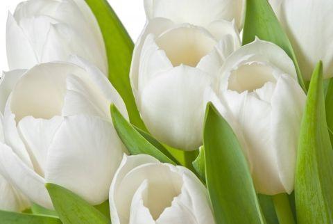 Купить тюльпаны украина доставка цветов в красноярске круглосуточно